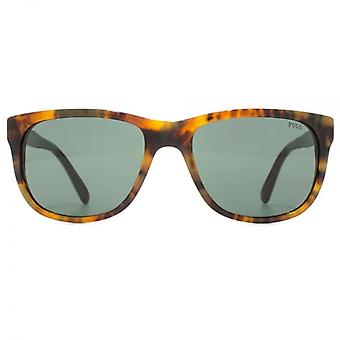 Polo Ralph Lauren Tartan Temple Square Sunglasses In Jerry Tortoise