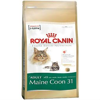 Royal Canin adulto alimento completo per Maine Coon 31 (4Kg)