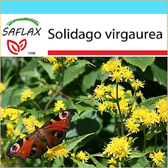 Saflax - Gift Set - 100 seeds - Goldenrod - Solidage verge d'or - Verga d'oro  - Vara de oro - Echte Goldrute