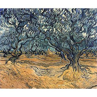 Vincent Van Gogh - Olive Trees, 1889 Poster Print Giclee