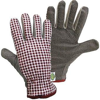 Cotton Garden glove Size (gloves): 10, XL FerdyF