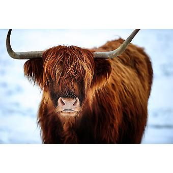 Country Matters Printed Drinks Coasters - Christmas Highland Cow