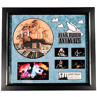 Pink Floyd - Autographed Drumhead Signed by band in Framed Case