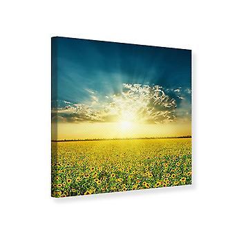 Leinwand drucken Sonnenblumen In der Abendsonne