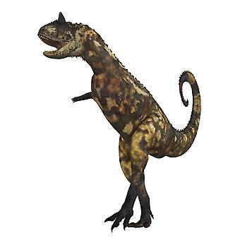 The Carnotaurus dinosaur was a large carnivore in the Cretaceous Period of Earths history Its fossils have been found in South America Its name means meat eating bull for the two horns on its head Pos
