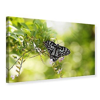 Leinwand drucken Papilio Butterfly XXL