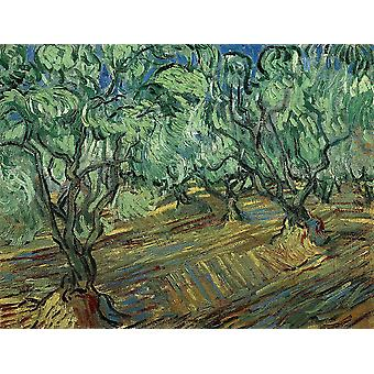 Vincent Van Gogh - Olive Grove with Blue Sky, 1889 Poster Print Giclee