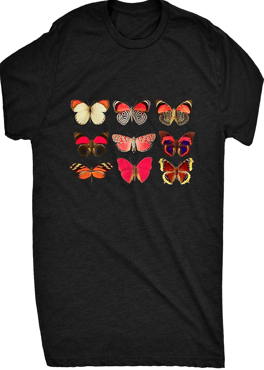 Renommierten sortierten Schmetterlingssammlung 1