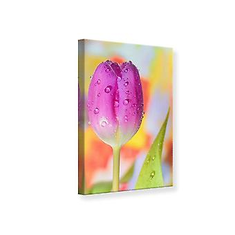 Canvas Print The Tulip In The Morning Dew