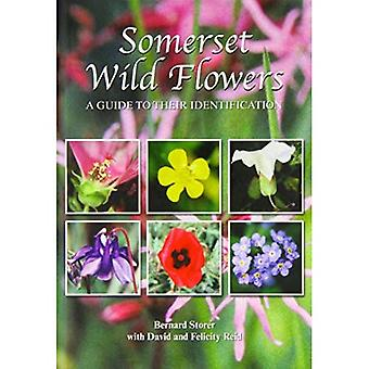 Somerset Wild Flowers: A Guide to Their Identification