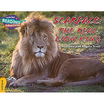 Scarface: De virkelige Løvernes Konge guld Band (Cambridge læsning eventyr)