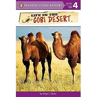 Vita nel deserto del Gobi