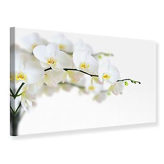 Canvas Print White Orchids