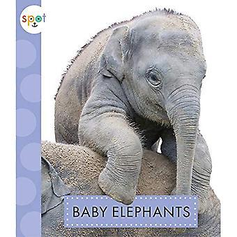 Baby Elephants (Spot (Paperback))