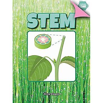 Stem (Plant Parts)