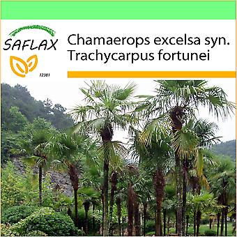 Saflax - Garden to Go - 10 seeds - Chinese Windmill Palm - Palmier à chanvre - Palma di Chusan - Palma enana - Hanfpalme