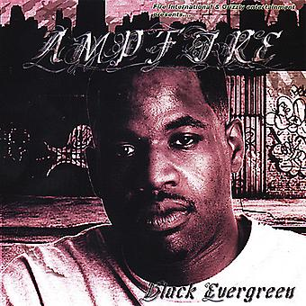 Amp Fire - Black Evergreen [CD] USA import