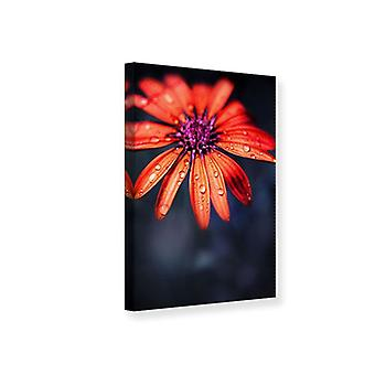 Canvas Print Colored Daisy