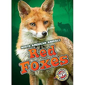 Red Foxes (North American Animals)