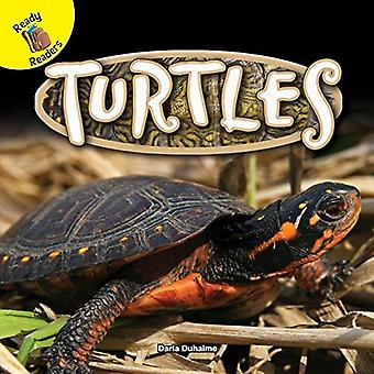 Turtles by Darla Duhaime - 9781683421573 Book