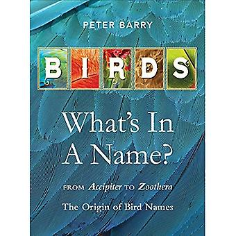 Birds: What's In A Name?