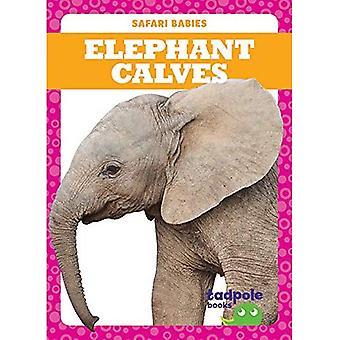 Elephant Calves (Safari Babies)