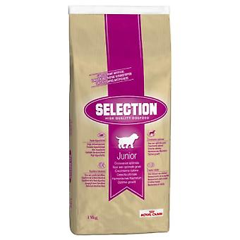 Royal Canin Junior Selection (Dogs , Dog Food , Dry Food)