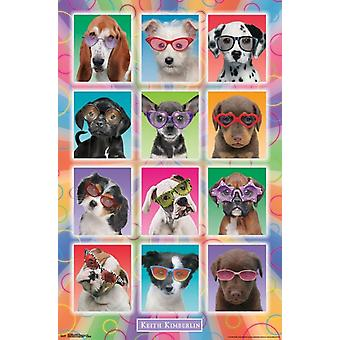Puppies - zonnebril Poster Poster afdrukken