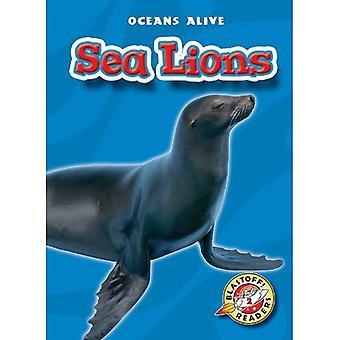 Lions de mer (océans vivants)