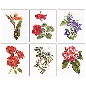 Floral Studies 1 On Aida Counted Cross Stitch Kit-6.75