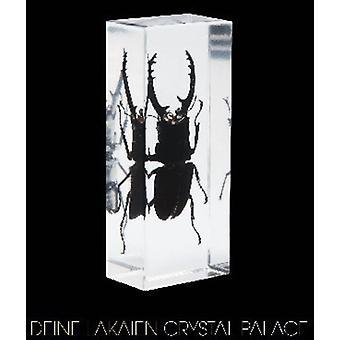 Deine Lakaien - Crystal Palace [CD] USA import