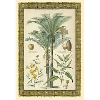 Palms in Bamboo I Poster Print (13 x 19)