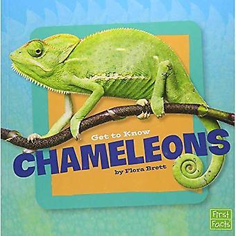 Poznaj kameleony (Poznaj gadów)