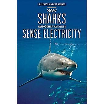 Hur hajar och andra djur känna el (Superior djurens sinnen)