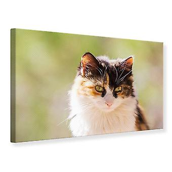 Canvas Print Cats Visit