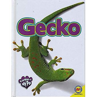 Gecko (Caring for My Pet)