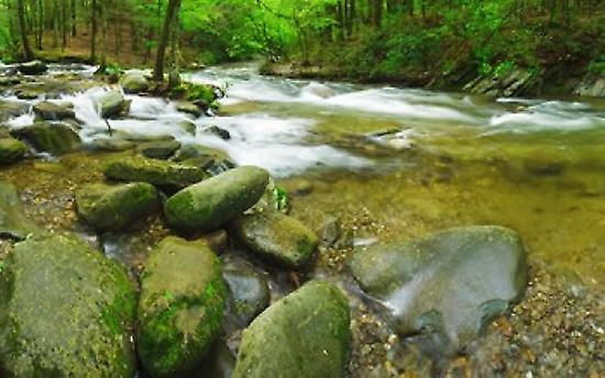 Stream folFaibleing through a forest Peu River Great Smoky Mountains National Park Tennessee USA Poster Print by Panoramic Images (36 x 23)
