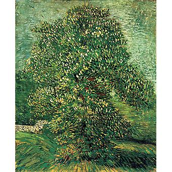 Vincent Van Gogh - Chestnut Tree in Blossom, 1887 Poster Print Giclee