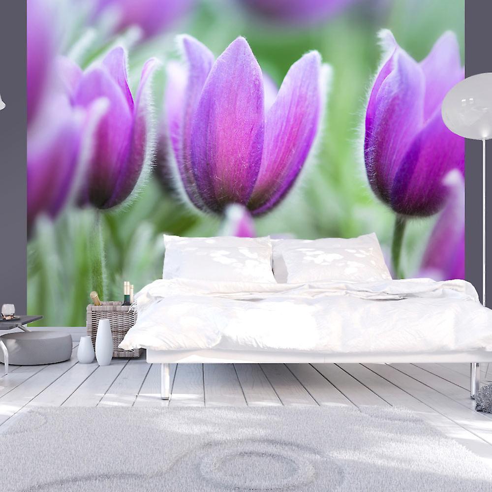 Papier peint - Tulipes violettes au printemps