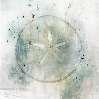 Kysten tåke Sand Dollar Poster trykk av Ken Roko