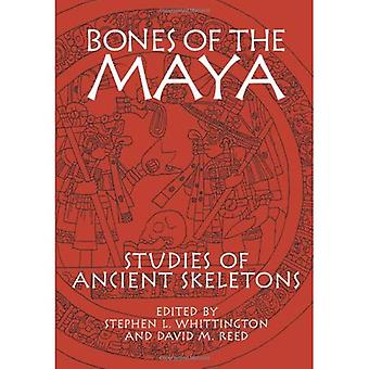 Knochen der Maya: Studien der alten Skelette