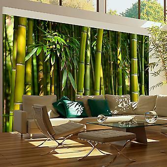 Fototapete - Asiatischer Bambuswald