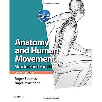 Anatomie et mouvement humain