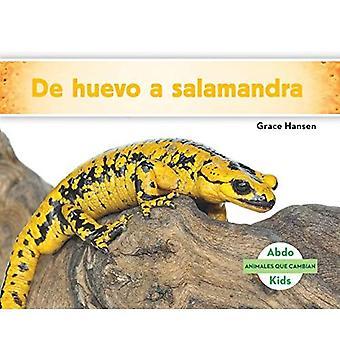 de Huevo a Salamandra (Becoming a Salamander ) (Animales Que Cambian (Changing Animals))