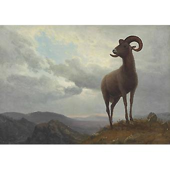 Albert Bierstadt - Long Horned Sheep Poster Print Giclee