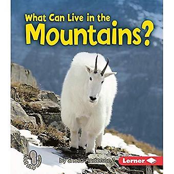 Wat kan leven in de bergen? (Eerste stap non-fictie)