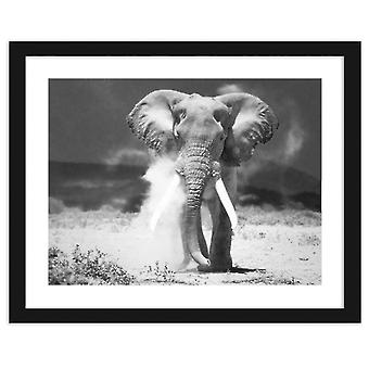 Picture In Black Frame, Elephant