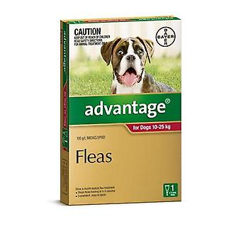 Advantage Red 1 Pack Large Dogs 10-25kg