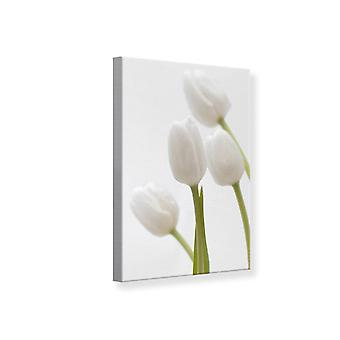 Tulipes blanches impression toile