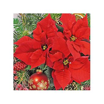 Ambiente 3 Ply Paper Napkins, Red Poinsettia